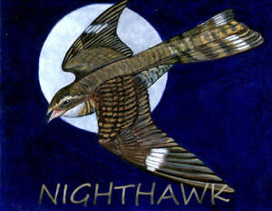 Nighthawk Band - for your event