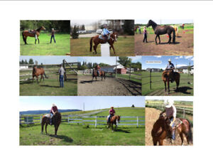 Travelling Horse Trainer - Mature, Reliable Proven Experience
