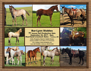 7th Annual Bar-Lynn Stables Fall Production Sale