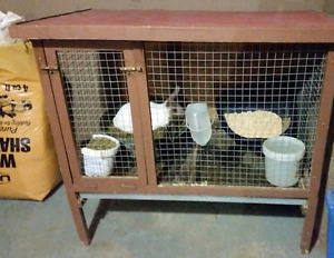 New Zealand female rabbit with hutch