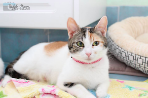 Lola rescue CAT to adopt VET WORK INC Ocean Reef Joondalup Area Preview