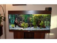 Eheim Freshwater Aquarium Complete