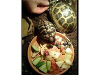 2 male tortoise's 2yr & 5yr old