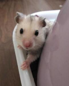 """Baby Male Small & Furry - Hamster: """"Sprinkles"""""""