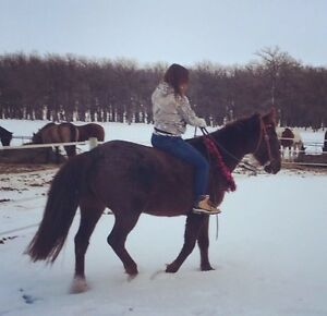 Great gelding available for part board!!