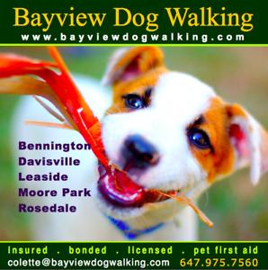 Dog Walks - Leaside. Davisville, Rosedale - Bayview Dog Walking