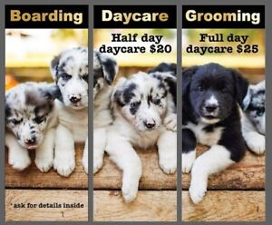 Doggie Daycare starting at $20 6473492434