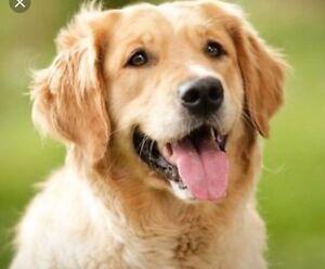 Companion Dog Wanted Reservoir Darebin Area Preview