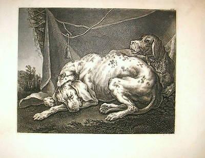 c1820 Hunde, Jagdhunde, Pointer - Kupferstich mit zwei Hunden