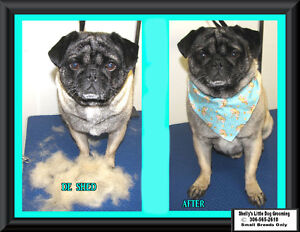 Shelly's Little Dog Grooming Regina Regina Area image 10