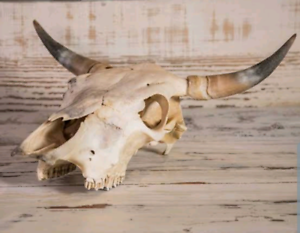 Wanted: Looking for skulls