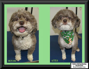 Shelly's Little Dog Grooming Regina Regina Area image 9