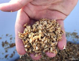 Céréales de brasserie à donner (drêches)