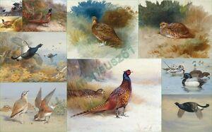 SET-OF-TEN-VINTAGE-GRAPHICS-POSTCARD-SIZE-7-x5-PRINTS-A-THORBURN-Birds-5