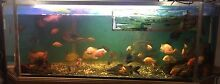 Mega tank 81/2 ft by 5 ft by 31/2 ft tank Taree Greater Taree Area Preview