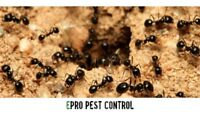 GUARANTEED PEST CONTROL AT LOWEST PRICE 416.834.3789