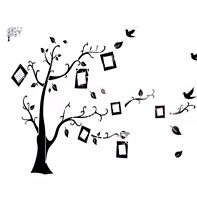 Tree Frames Art Wall Accent DECAL (New!)