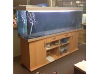 Rena fish tank