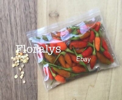 (GUAM Hot Boonie Peppers Organic 1 oz Whole Pickled Donne + 30 Seeds to Grow)