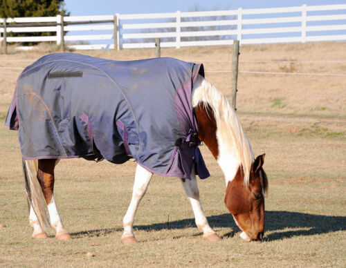 Affordable Horse Rug Buying Guide