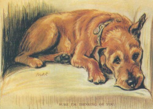 Irish Terrier - MATTED Dog Print - Lucy Dawson NEW