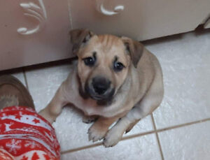 Dogs and puppies for adoption through Northern Hope Dog Rescue