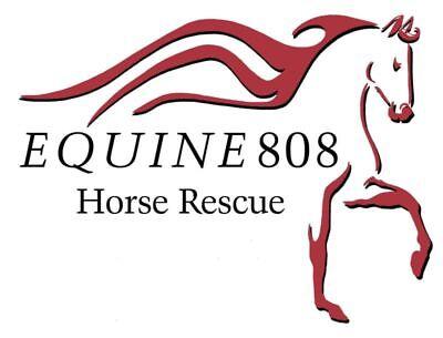 Equine 808 Horse Rescue