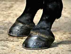 Experienced farrier available to new clients