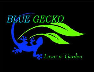 Blue Gecko I Lawn Mowing I Garden Maintenance Mudgeeraba Gold Coast South Preview