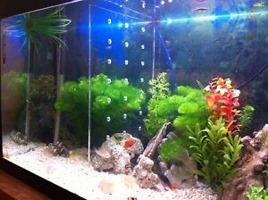 Self standing fish tank divider separate fish aquarium for Vendeur aquarium