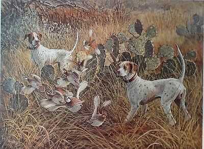 CLOSE ENCOUNTER Pointer Bird Dogs Bob White Quail Fast ActionScene by Herb Booth