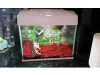 250 tropical fish tank