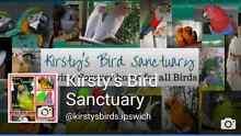Kirsty's Bird Sanctuary Minden Somerset Area Preview