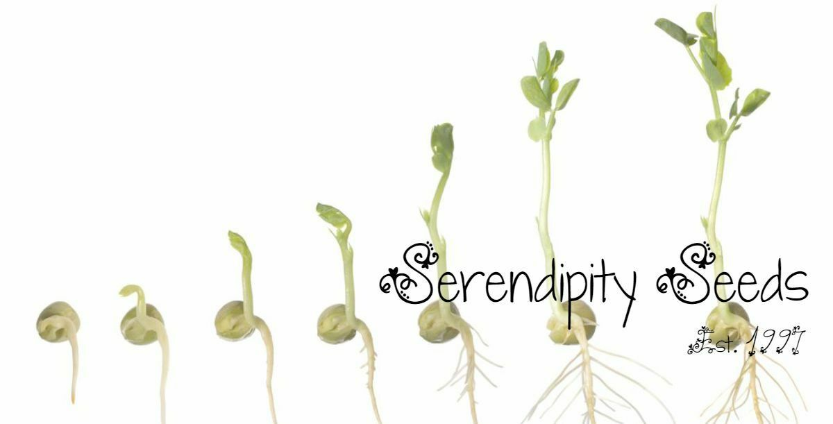 Serendipity Seeds