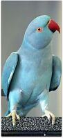 Female (Sky Blue) Indian Ring Neck Parrot price is firm!