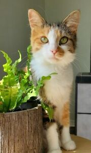 Adopt Cats & Kittens Locally in Canada | Pets | Kijiji