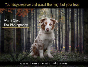 Professional Dog photography