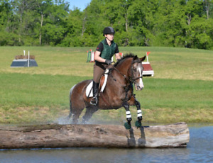 Experienced Eventer for Part Board
