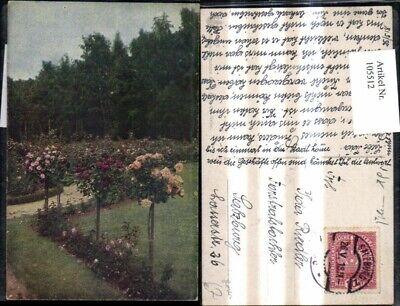 105512,Foto Ak Blumen Rosen Hochstamm i. Garten Parkanlage