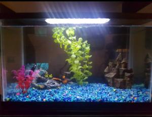 Aquarium et accessoires à vendre