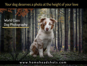 Professional photographer for your dog