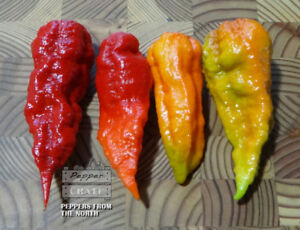 Super Hot Peppers, Seeds, and Seasonal Plants!