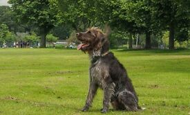 Dog walking service in Bristol. Horfield and Frenchay/ Stoke Park