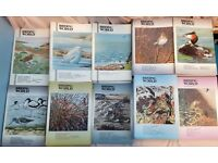 BIRDING WORLD MAGAZINES - 70 ISSUES - GOOD CONDITION