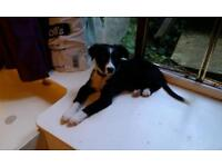 Room wanted with for me and my Collie in Southport