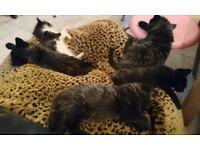 5 kittens for sale.