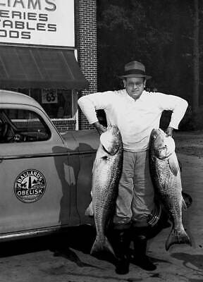 Red Drum (Redfish, Channel Bass) Weighing 42 Pounds 1948 OLD FISHING PHOTO