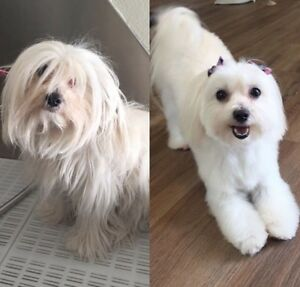 Fall Special! $10 OFF DOG OR CAT GROOM!