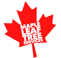 Maple Leaf Tree and Landscape service's