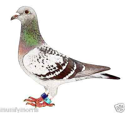 RACING PIGEON no2  A5 LIGHT  IRON ON T SHIRT TRANSFER